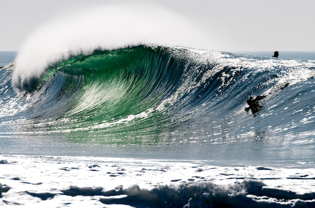 Perfect wave in the landes france