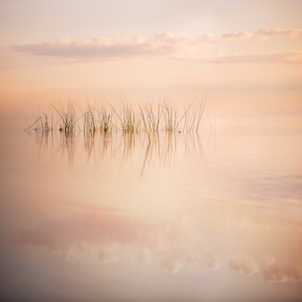 In the perfectly calm surface of the sea reflects the gentle pink evening sky, from the water sticks a ridge of rare thin grass, square
