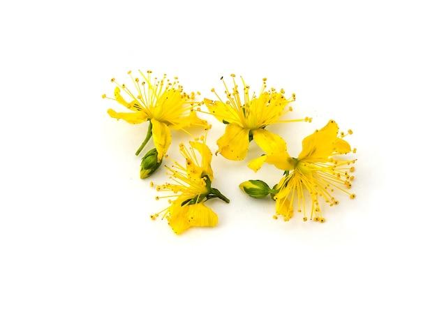 Perforate st john's-wort 꽃 네 개의 작은 노란색 꽃