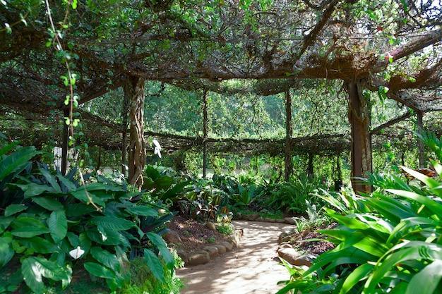 왕립 식물원, peradeniya, kandy, sri lanka에있는 ficus benjamina의 pergola