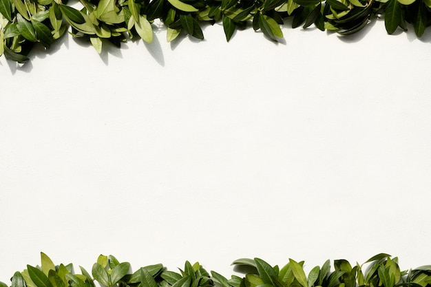 Листья барвинка на белом фоне. рамка из зеленой листвы. флористика, ботаника и натуральный декор. концепция свободного пространства.