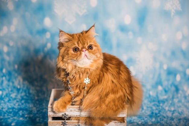 Персидский кот на синем новогоднем фоне со снегом