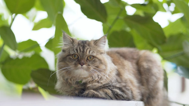 Persian cats living in the garden