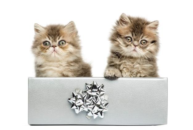 銀のプレゼントボックスに座って、カメラを見て、10週齢、白で隔離のペルシャの子猫