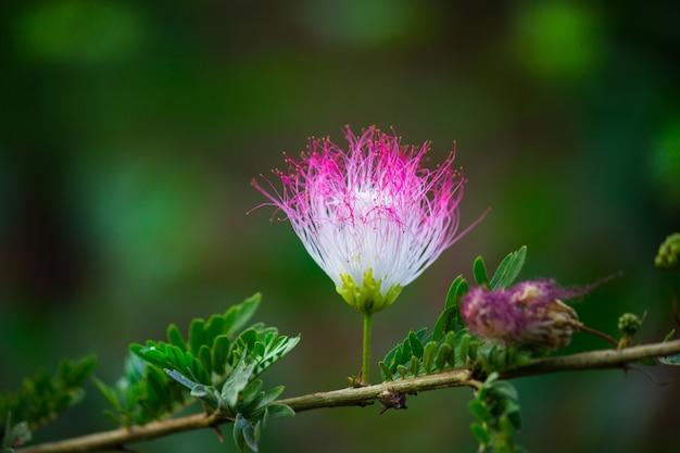 페르시아 실크 꽃