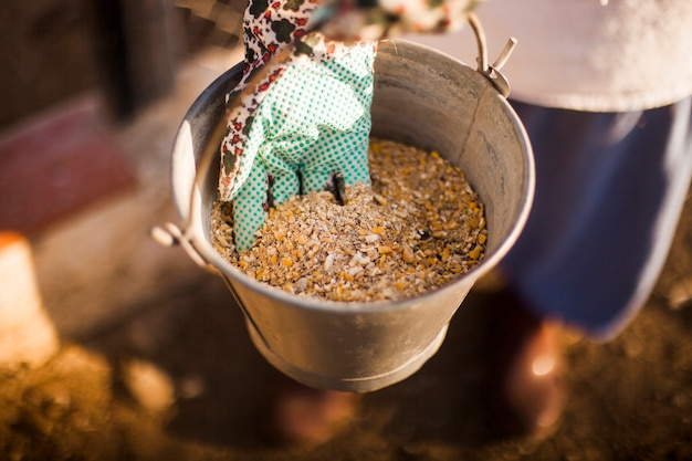 A person hand holding bucket with fodder