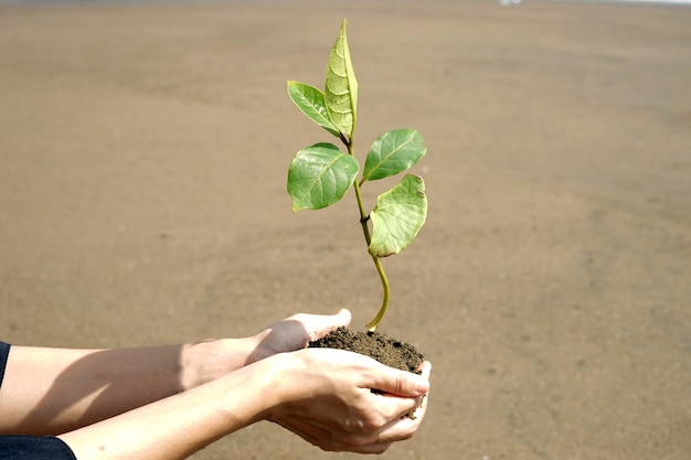 A person hold a mangrove before planting