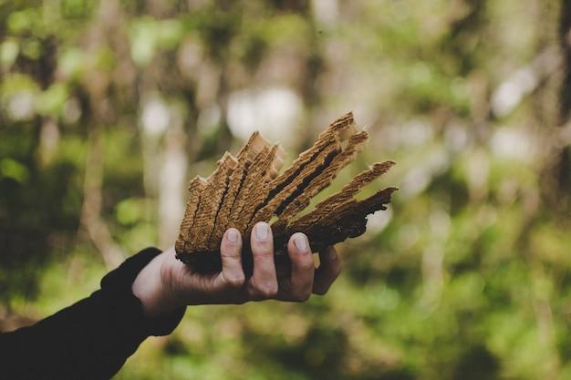 森で乾いた木を持っている人
