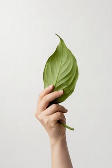 Лицо, держащее зеленый лист
