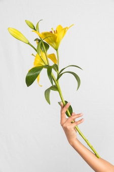 Person holding big yellow flower