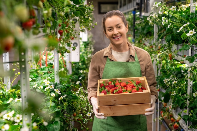 A person holding a box of red ripe strawberries in vertical farm