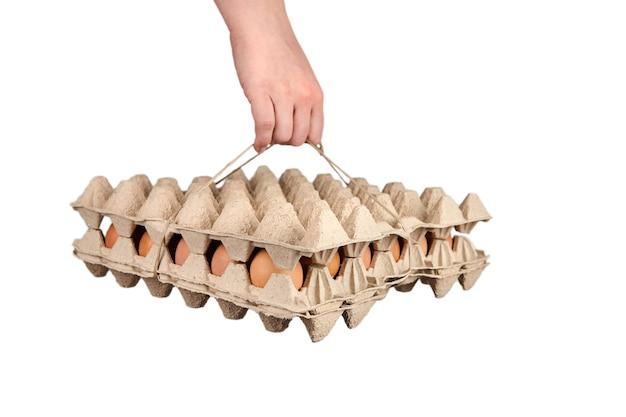 白で隔離段ボールトレイに茶色の鶏卵を保持している人