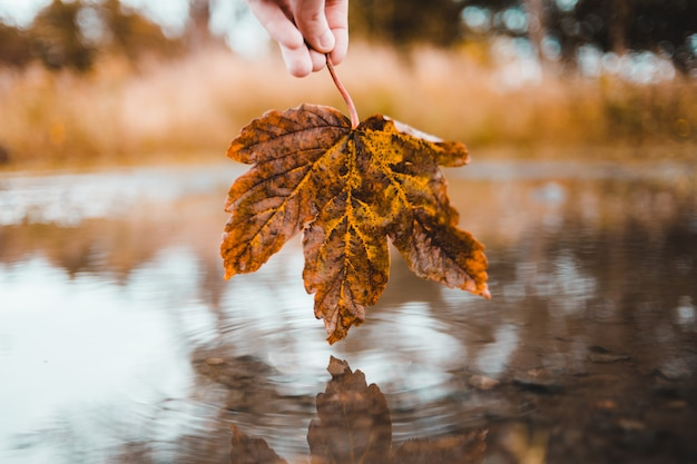 Person holding brown maple leaf above body of water