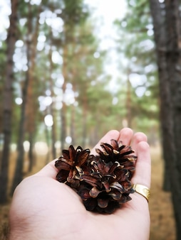 Person holding a conifer cones