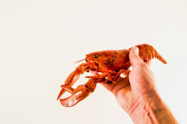 Person holding a crayfish in his hand