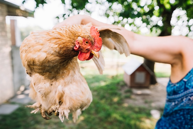 A person holding hen in hand at outdoors