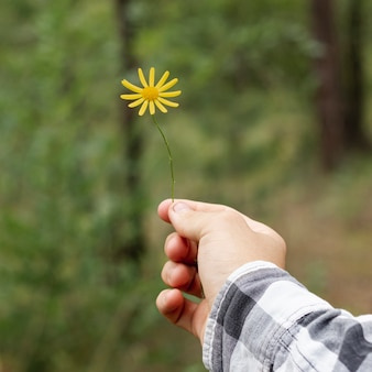 Person holding little yellow flower