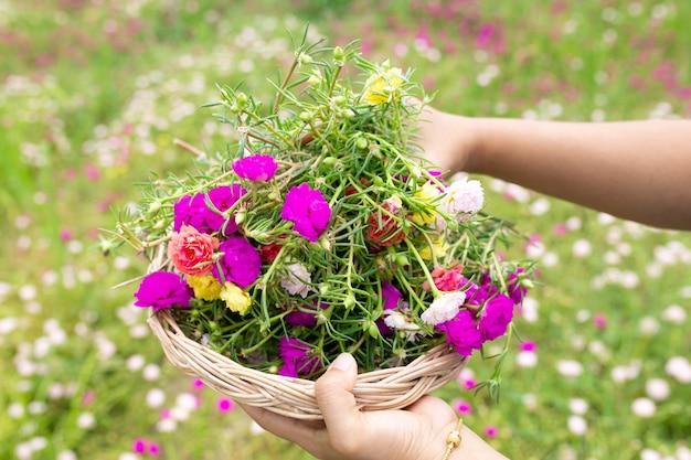 庭で苔バラの花を持っている人