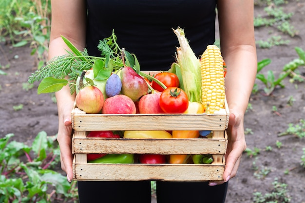 屋外のオーガニックガーデンからのバイオ野菜や果物でいっぱいの木枠ボックスを持っている人
