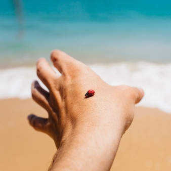 A person looks at a ladybug in his hand