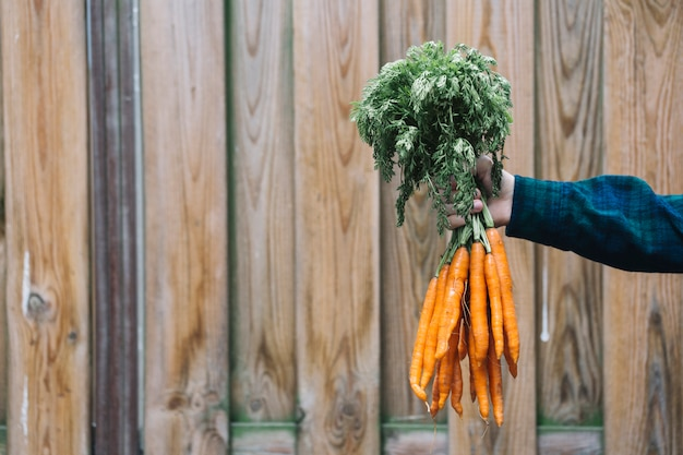A person's hand holding bunch of carrots in front of wooden backdrop