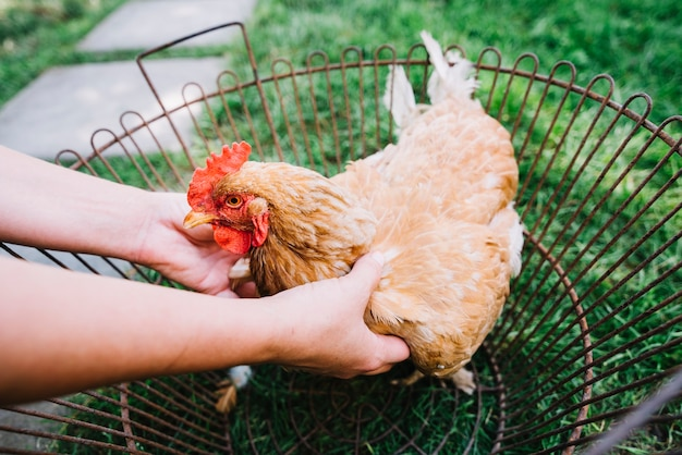 A person's hand holding hen in the metallic cage