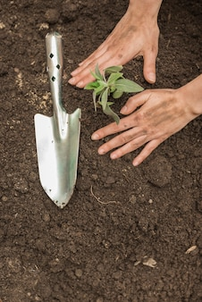 A person's hand planting seedling into soil near hand shovel