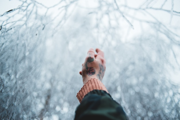 Person's hand pointing to snow-covered tree