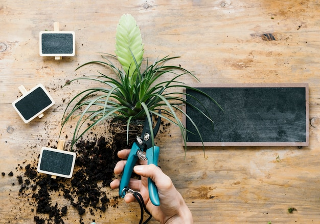 Person's hand pruning plant leaves with pruner above wooden bench