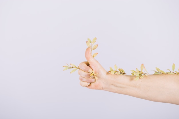 A person showing thumb up sign with twigs isolated over white background