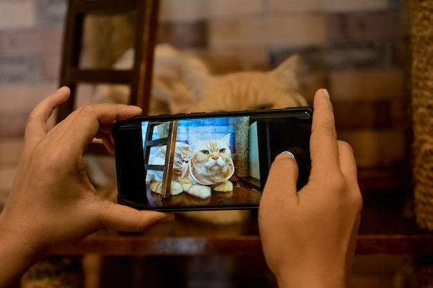 A person take a picture of a cat with her mobile phone.