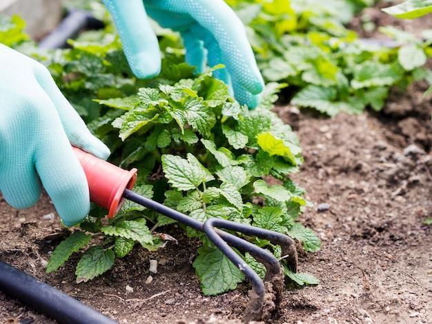 Человек заботится о своем саду крупным планом
