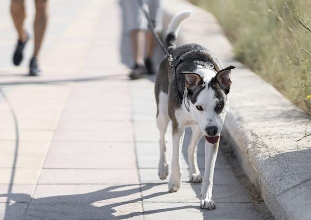 通りで黒と白の犬を歩いている人