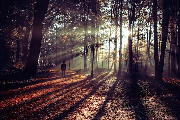 Человек идет по красивой дороге, покрытой осенними листьями
