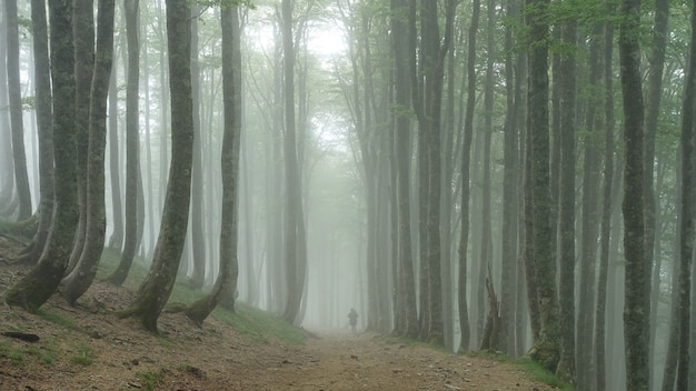 Person walking through a forest covered in trees and fog