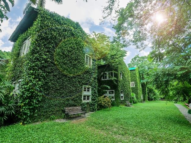 태양과 렌즈 플레어 배경이 있는 밝은 푸른 하늘에 덩굴과 녹색 식물로 덮인 집의 원근 및 야외 전망.