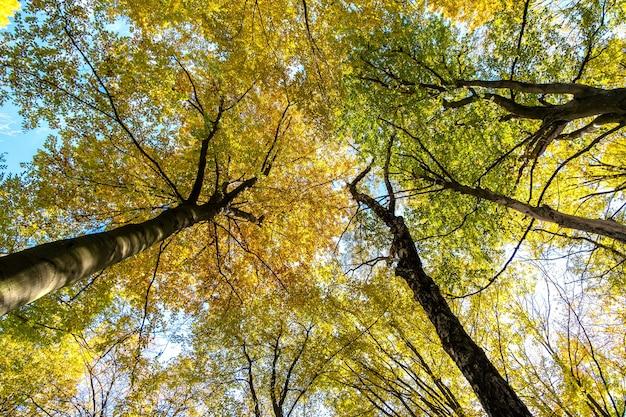 밝은 오렌지색과 노란색 잎이있는 가을 숲의 전망을 아래에서 위로 바라보십시오.