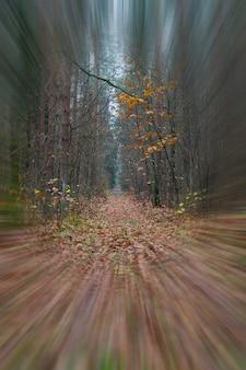 Перспектива мокрой тропы в лесу. лесная тропа в пасмурный день. никто