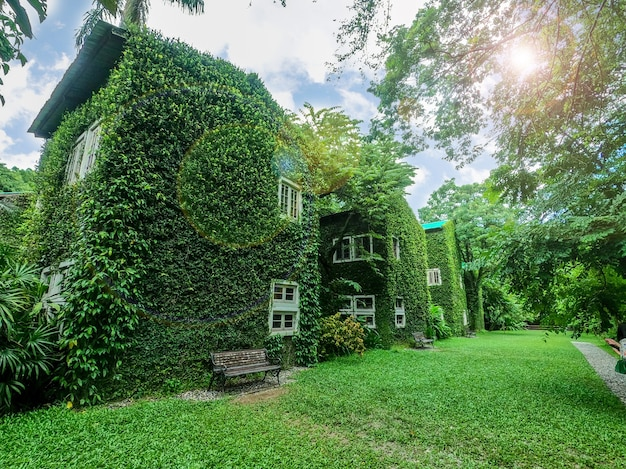 Perspective and outdoor view of house covered by vines and green plants on bright blue sky with sun and lens flare background.