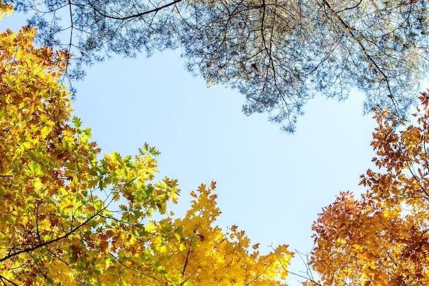 明るいオレンジと黄色の葉で秋の森の視点を上から。晴れた秋の天候では、厚い林冠を持つ密な森。