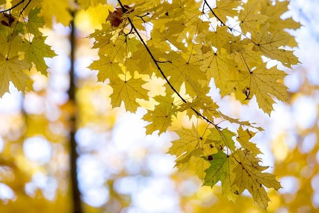Перспектива осеннего леса с ярко-оранжевыми и желтыми листьями.