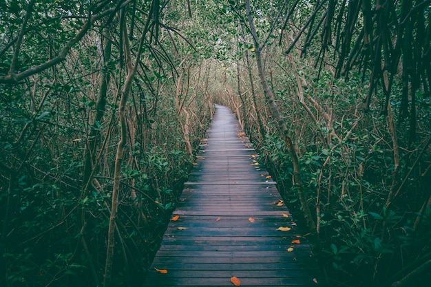 Perspective of wood bridge in deep forest.