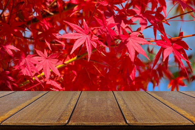 Perspective wood counter with fully red japanese maple leaves.