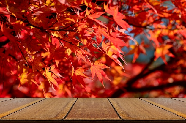 Perspective wood counter with fully red japanese maple tree garden in autumn