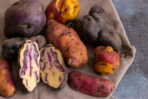 Peruvian native potatoes, harvested in cusco, peru
