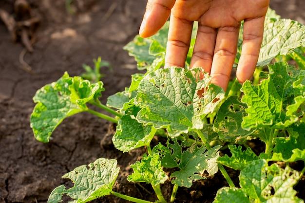 成長している植物の苗を破壊する虫や蛾などの害虫。