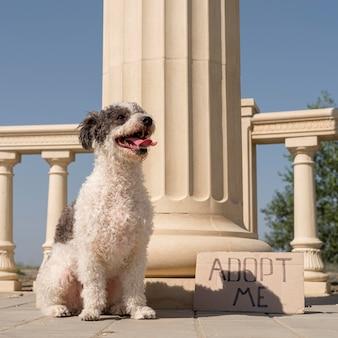 Concetto di adozione dell'animale domestico con cane carino