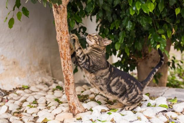 애완 동물 및 위생-줄무늬 고양이가 나무에 머물면서 발톱을 갈고 있습니다.