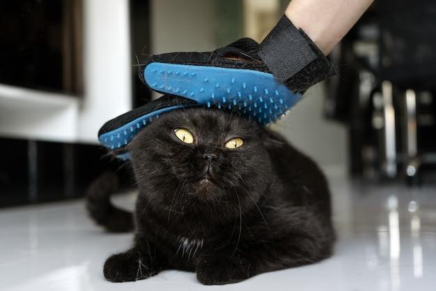 Забота о животных. расчесывание шерсти мягкой перчаткой.
