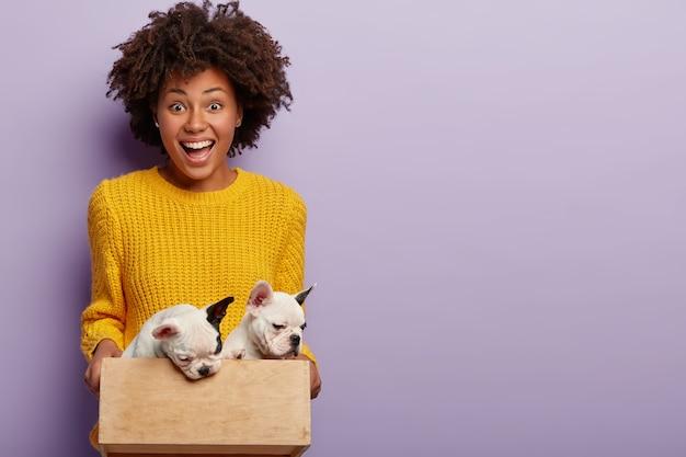 애완 동물 관리 개념. 즐거운 어두운 피부를 가진 여성 주인은 작은 나무 상자에 강아지를 안고 오른손으로 줄 준비가되어 있으며 개 가족 성장을 기뻐하며 노란색 스웨터를 입습니다.